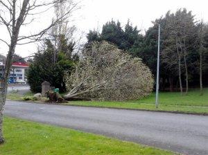 Fallen Tree - Large