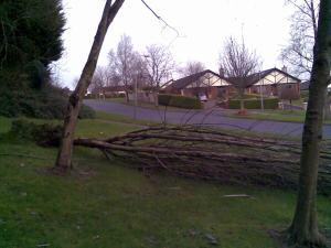 Fallen Tree - Small